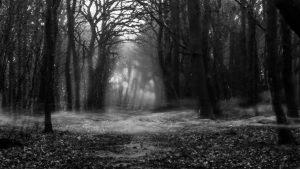 zombie-cat-woods